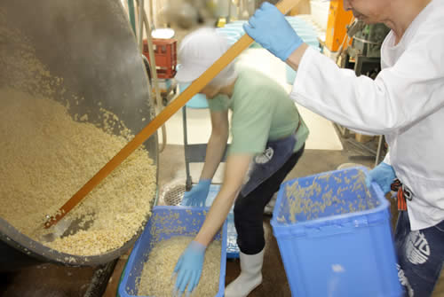 煮上がった大豆を仕込みに向けて計量する、白味噌の作り方